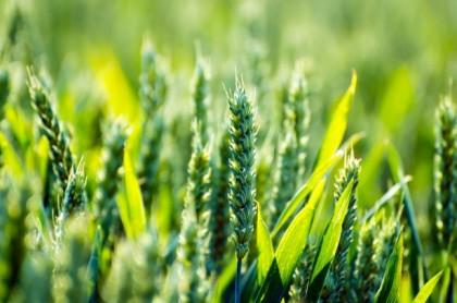 3月8日 第2回日亜農林水産業・食料産業対話