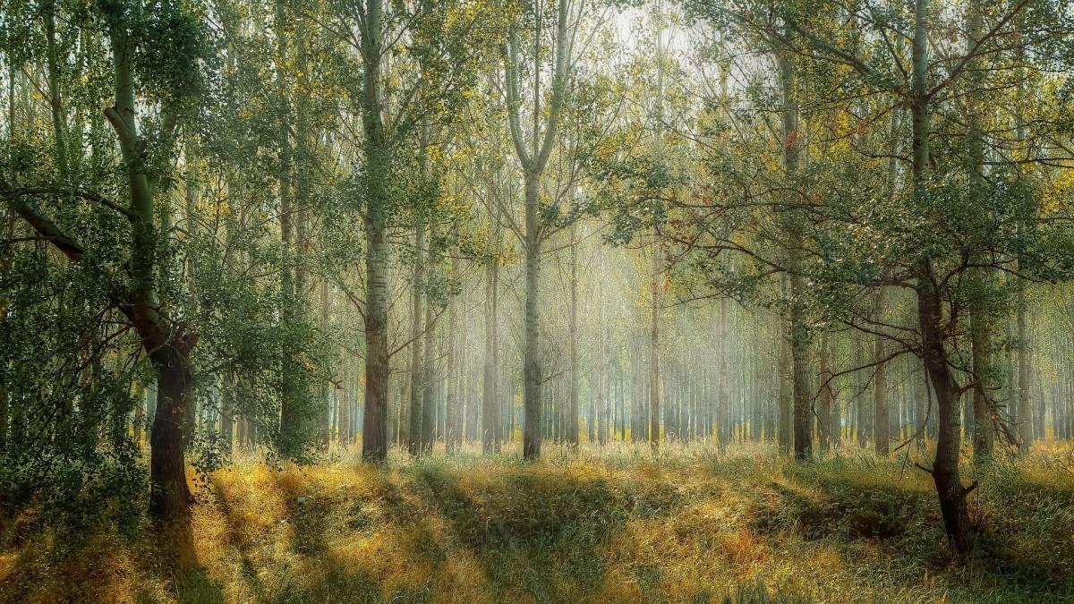 間伐と山の資源保護