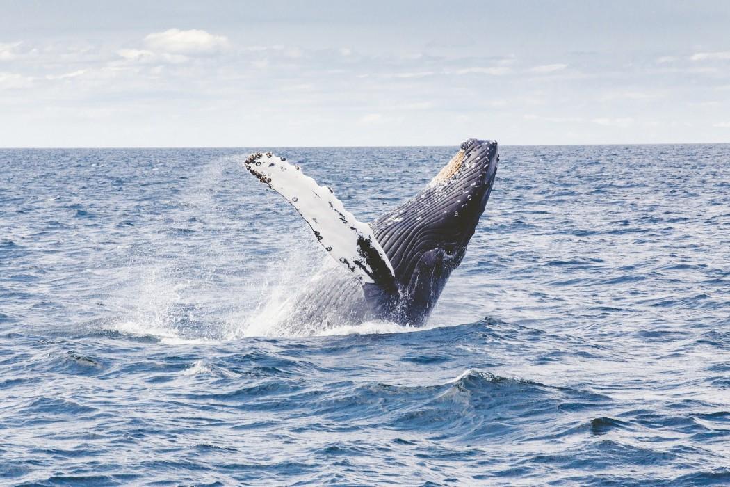 日本と世界の捕鯨の歴史